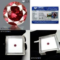 Diamond Certified IGR Red Purplish Pink Diamond 0.22 Cts Diameter 3.7 mm Natural Berlian Merah Pink Asli Africa Memo Sertifikat IGR